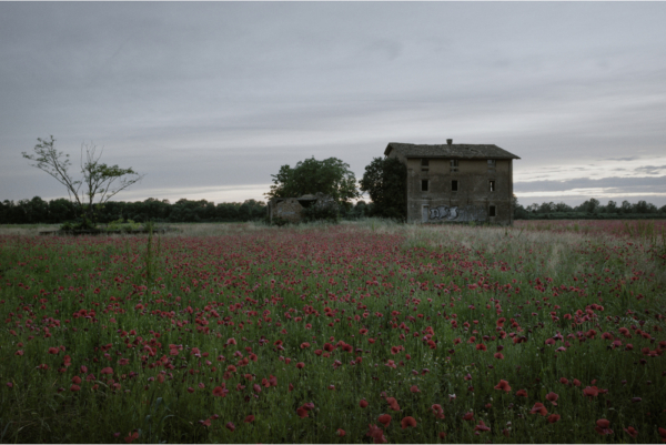 RED POPPY FIELDS. The Great War Reflected in Contemporary Photography