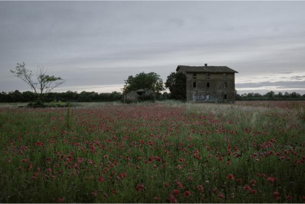 RED POPPY FIELDS. Der Weltkrieg reflektiert durch zeitgenössische Fotografie