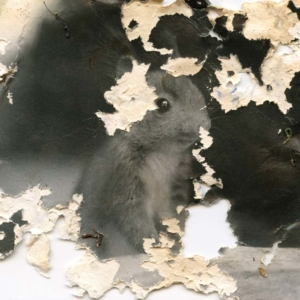 Joan Fontcuberta: Gastropoda & Trauma